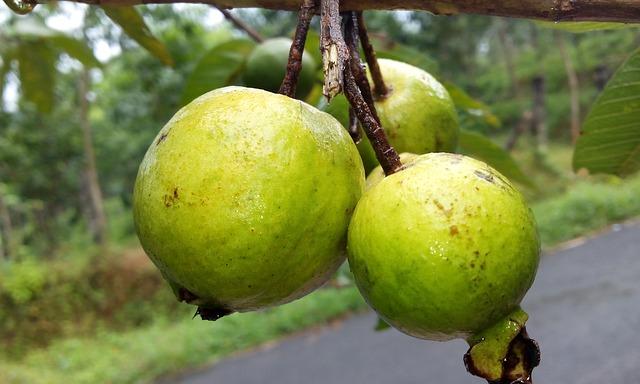 guava-888070_640