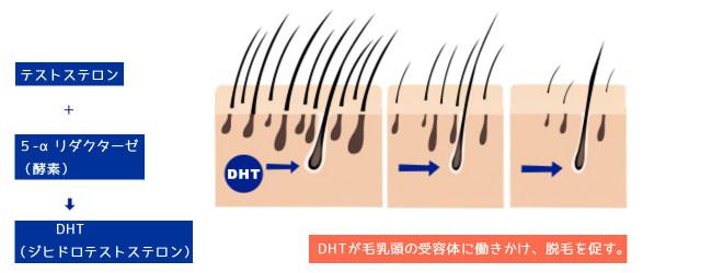 DHTが抜け毛を促す