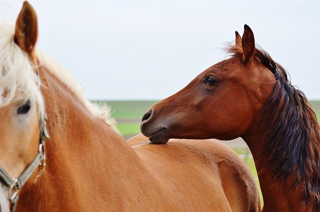horse-1006351_640